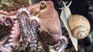 연체 동물-달팽이-문어-해파리-동물 비디오