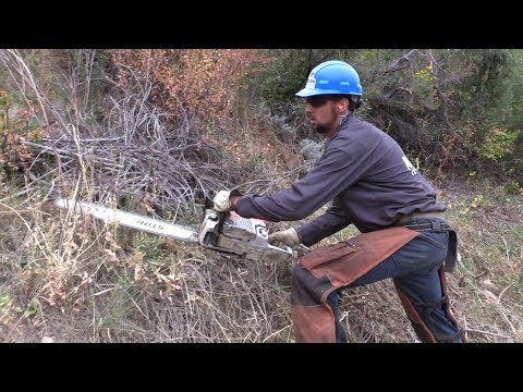 Mile High Youth Corps Teams Up With Denver Water