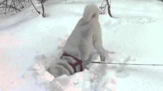 雪の下でも野生動物の匂いは分かるのでしょうか。