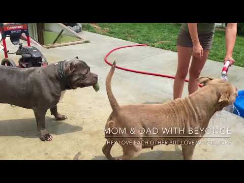 WATCH IN HD*** BGK's Shadow with ManMade Kennels