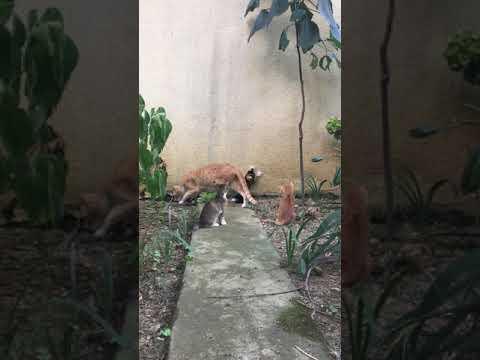 MOM CAT VS 3 KITTENS - cute cat videos