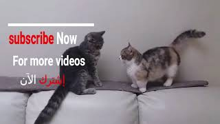 Funny Cute Cats ..