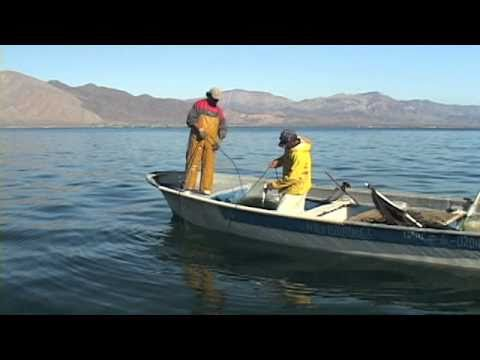 Bahia de los angeles bay of hope youtube for Fishing in los angeles