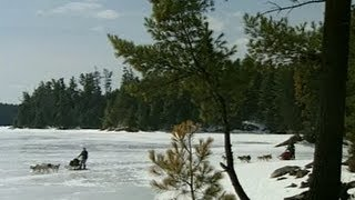 Northern Ontario: Dog Sledding In Temagami