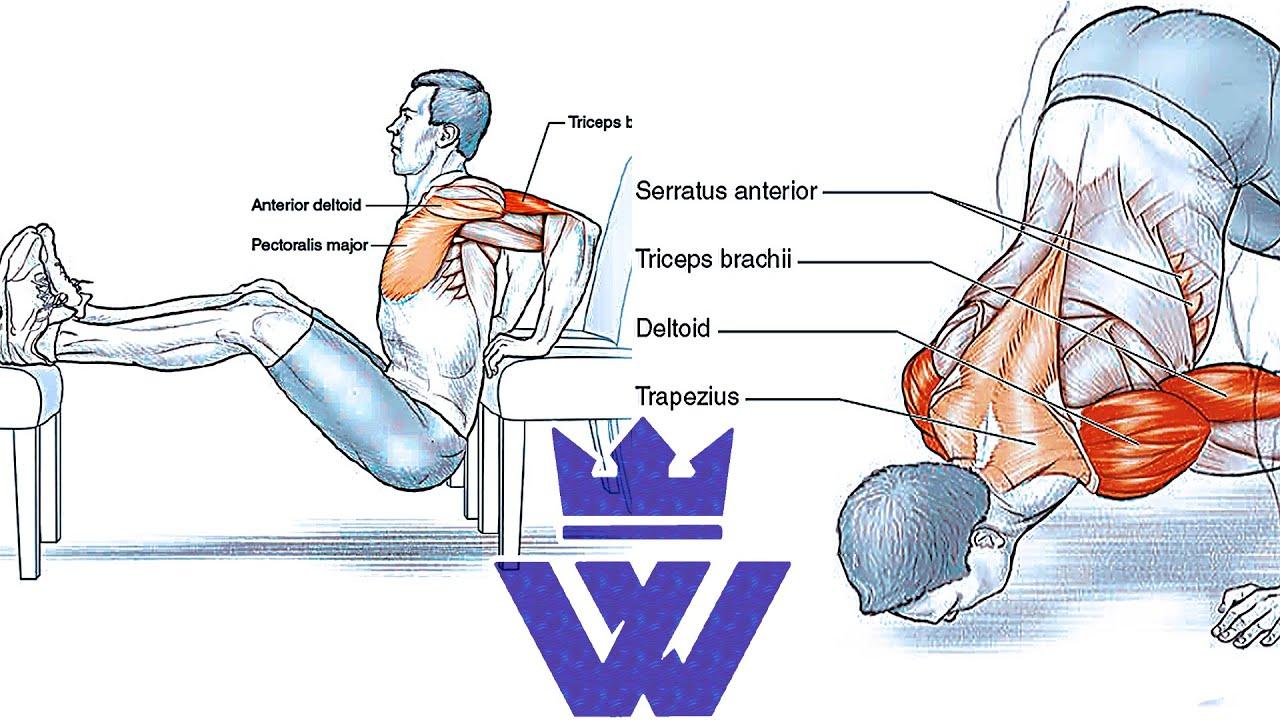 deltoid lateral