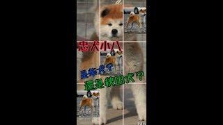 台灣第一場  【#日本犬聯合展】。即。將。隆。重。登。場。 想一睹日本...