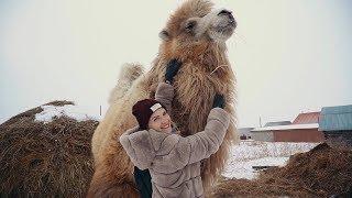 Зима, Тюмень, верблюд