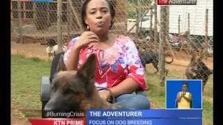 The Adventure: Focus on dog rearing
