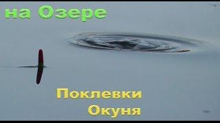 пОКЛЕВКИ. На Озере. Половил окуньков на поплавочную удочку. Подводные съемки. Рыбалка fishing