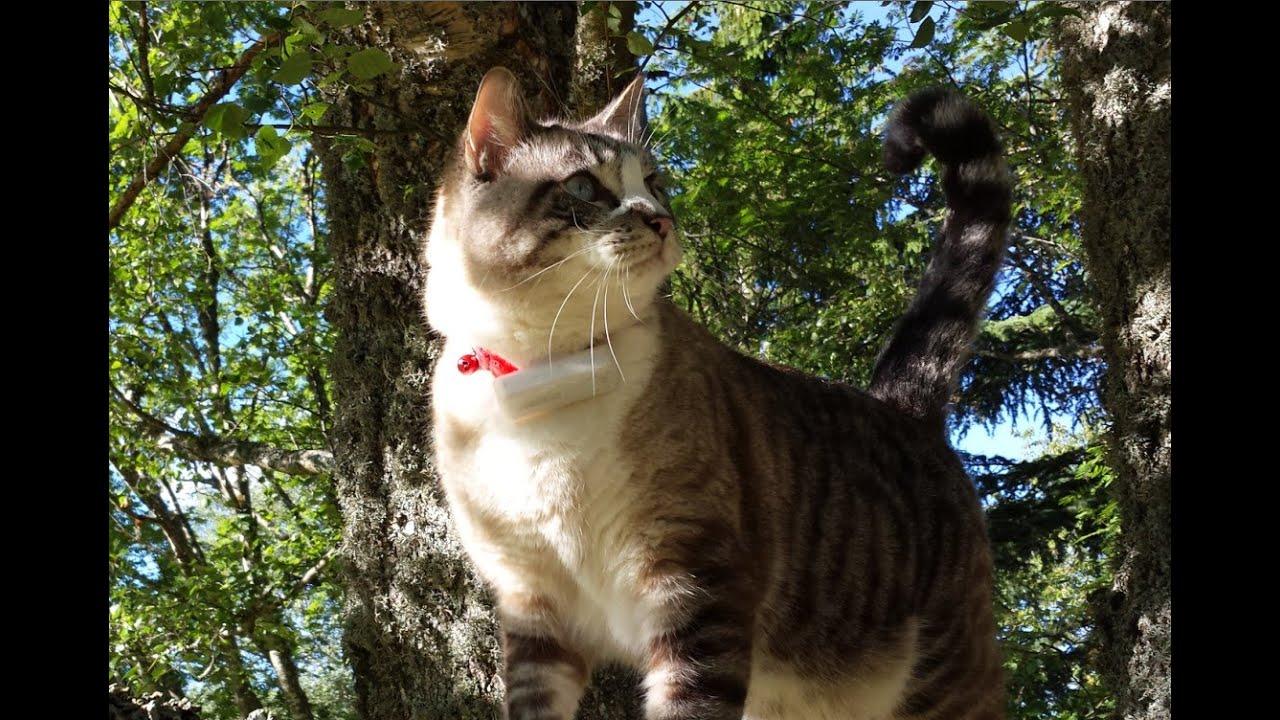 tutoriel balise gps weenect pour mon chat version longue
