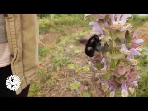 Teaser d'une visite des Jardins de La Fount à Sigean