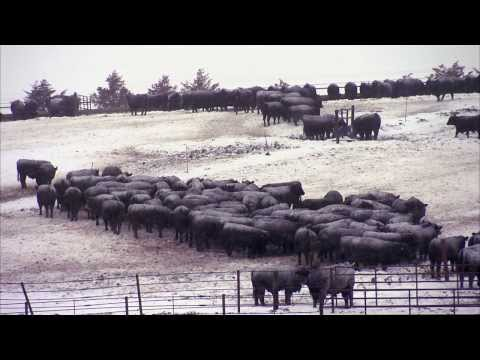 Vetsoncall beef cattle feedlot commits to animal comfort