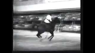 Record du monde de saut d'obstacle - 2m47
