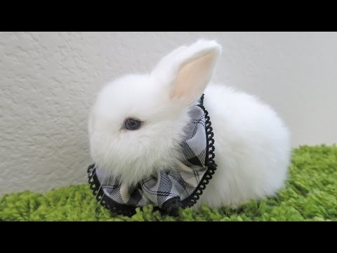 Scrunchie Bunnies!
