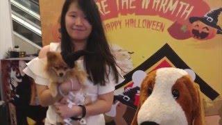 How to train your pomeranian dog / Cara melatih anjing pom