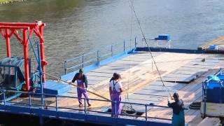 千歳川のインディアン水車。サケが遡上する秋になると、サケを捕獲し水...