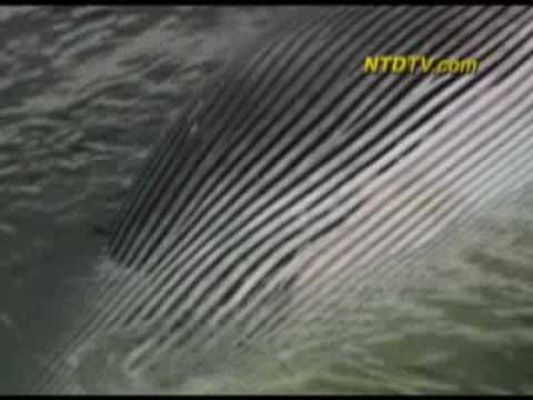 Cruise Ship in Whale Collision
