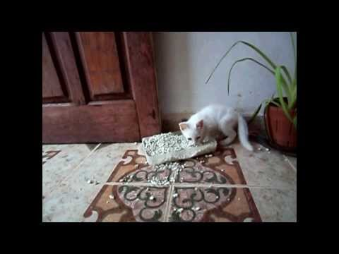Funny Cats Compilation – Funny Cat Videos Ever- Funny Videos – Funny Animals – Funny Animal Videos 2