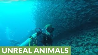 Scuba diver gets lost in enormous school of fish