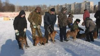 """Выставка охотничьих собак """"Карело-финская лайка 2010"""""""