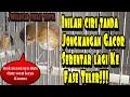 Ciri Tanda Jongkangan Gacor Sebentar Lagi Ke Fase Teler  Mp3 - Mp4 Download