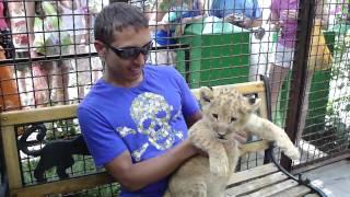 прикольный львенок. 24.07.2010