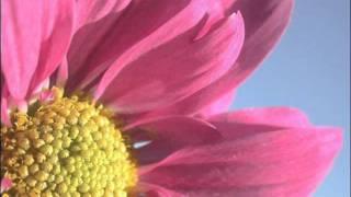 Pretty Pretty Star - Billiy Corgan - The Future Embrace