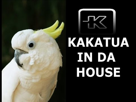 Kakatuaindahoz The Best House Music Dance 2010 Livedj Hd