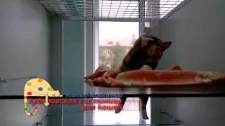 """Хабаровская гостиница для кошек """"Усатый-полосатый"""""""