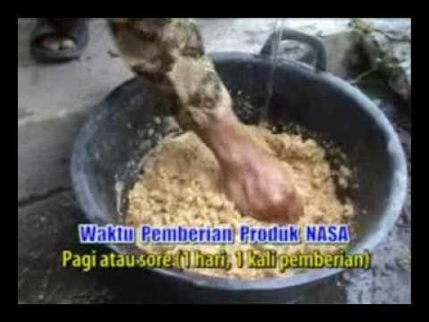 Download 087 839 518 166 (XL) Budidaya kambing, ternak kambing, penggemukan kambing, kambing potong