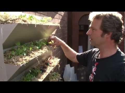 At Barrett House, food is climbing up the walls! (Vertical Garden installation video)