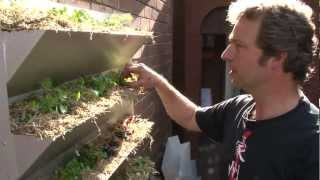 At Barrett House, food is climbing up the walls! (Vertical Garden installation video)