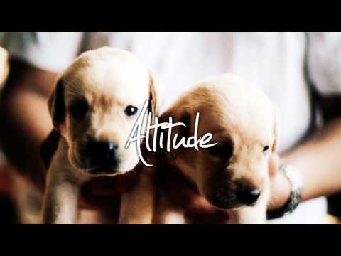 Music Supplier! AltitudeTracks!