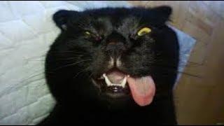 Лютые приколы. Кот наркоман.
