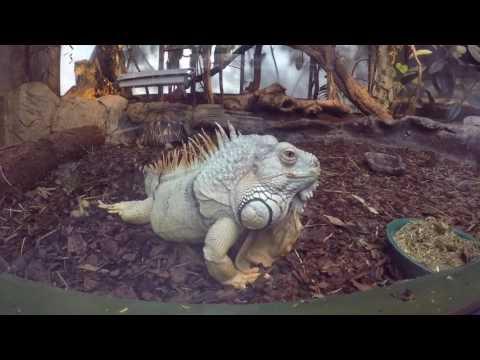 Zoo animals Copenhagen