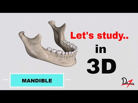 Mandible : Favorite bone of dentists?