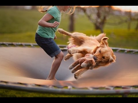 Funniest  Dog And Animals Jumping  on Trampoline Compilation