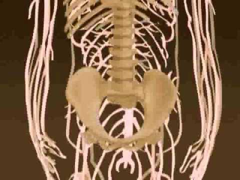 TLC Human Body Spot