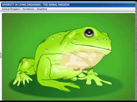 CBSE Class 9 Science, Diversity in Living Organisms -3, The Animal Kingdom