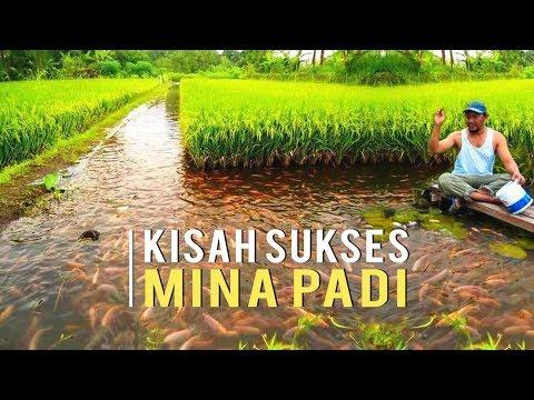 Kisah Sukses Mina Padi Petani Untung Berlipat dan Bisa Bangun Rumah