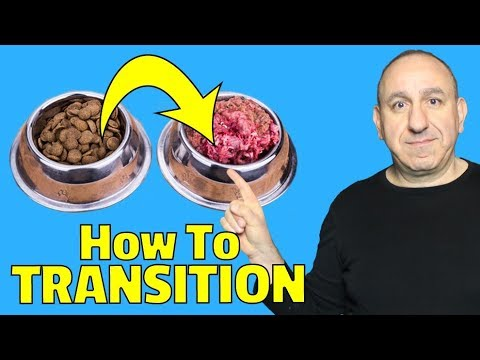 how-to-transition-to-a-raw-diet---raw-feeding-dogs-101