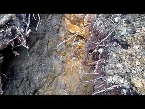 British Columbia Mining Gold Veins