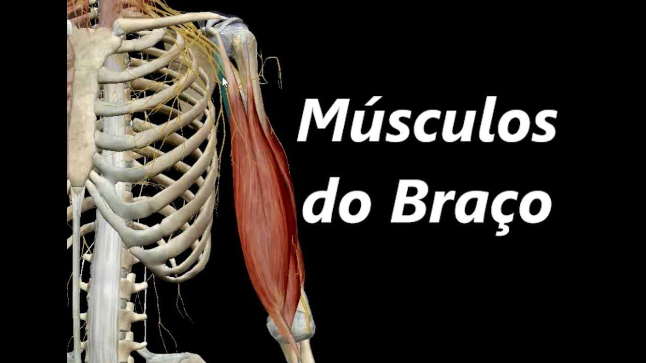Atractivo Músculos Anatomía 3d Regalo - Imágenes de Anatomía Humana ...