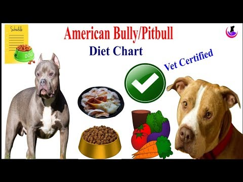 American Bully/Pitbull Diet Chart II dog and vet II Hindi