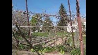 Семья Бровченко. Удобные многолетние подвязки для помидоров, огурцов и перца.