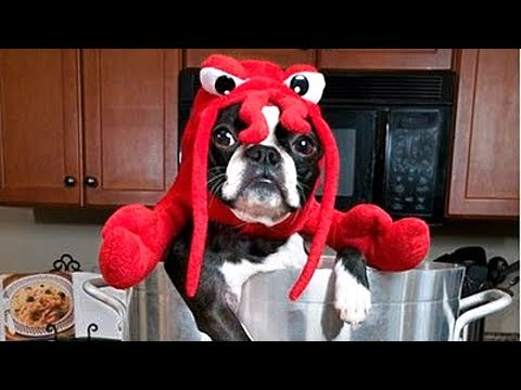 Dogs Wearing Halloween Costumes Compilation
