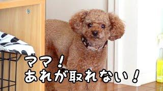 Taruちゃんが、台の下のものを取ろうと必死になっていたので、カメラを...