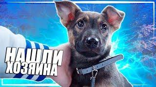 Спасение щенка. Продолжение / SANI vlog