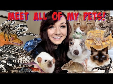 MEET ALL OF MY PETS (50+ ANIMALS!)