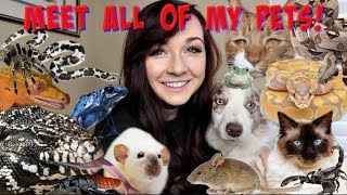 Download MEET ALL OF MY PETS (50+ ANIMALS!) Mp3 and Videos